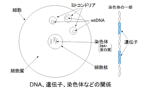 DNAなどの関係