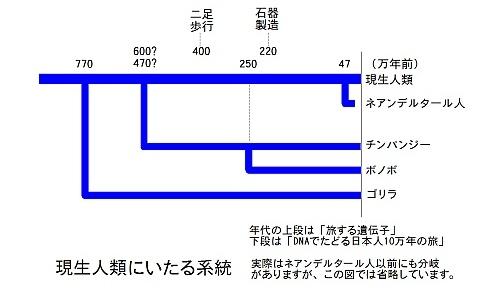 現生人類にいたる系統図